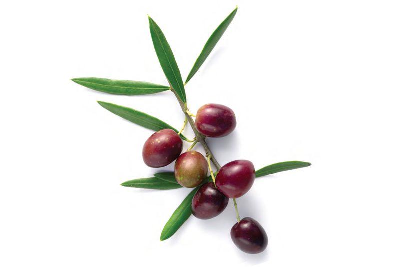 Coniglio alla Ligure con olive e pinoli