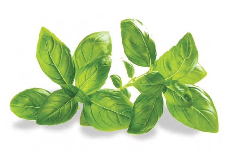 Pesto Genovese  (original)